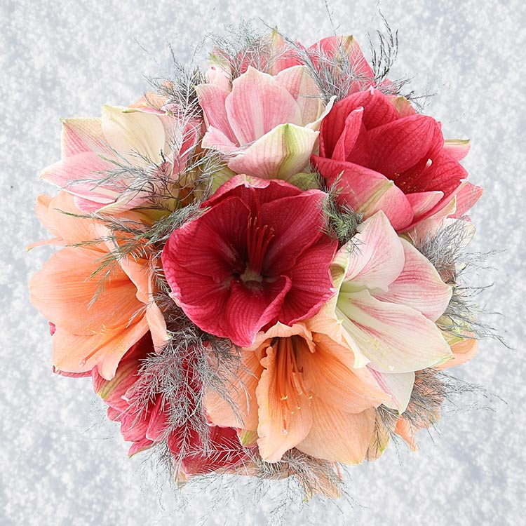bouquet-d-amaryllis-et-son-vase-750-3665.jpg