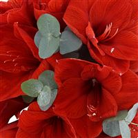 bouquet-d-amaryllis-rouge-et-son-vas-200-4140.jpg