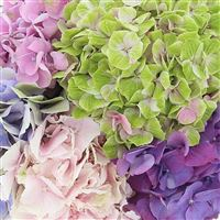 bouquet-d-hortensias-200-2572.jpg