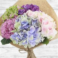bouquet-d-hortensias-200-2573.jpg
