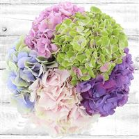 bouquet-d-hortensias-200-2574.jpg