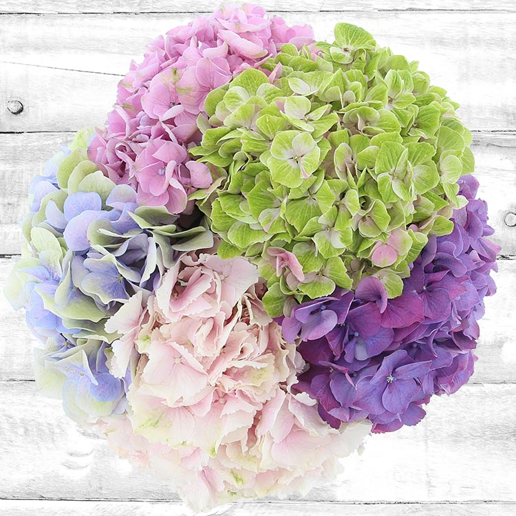 bouquet-d-hortensias-750-2574.jpg