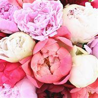 bouquet-de-15-pivoines-et-son-vase-200-4756.jpg