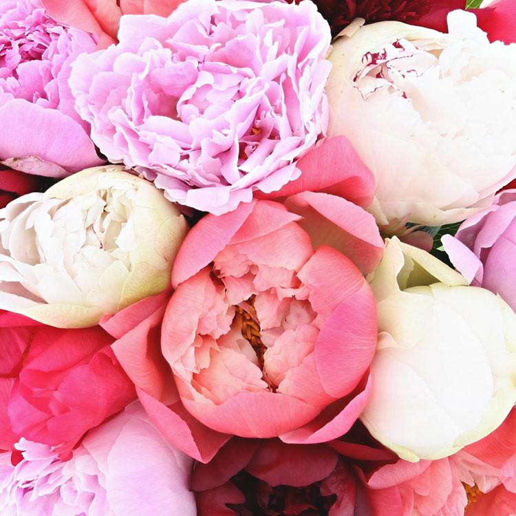 bouquet-de-15-pivoines-et-son-vase-750-4756.jpg