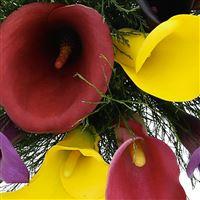 bouquet-de-callas-multicolores-200-2496.jpg