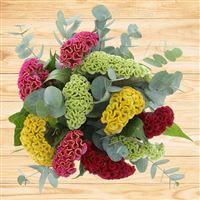 bouquet-de-celosies-varies-200-2547.jpg