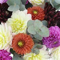 bouquet-de-dahlias-multicolores-200-2554.jpg