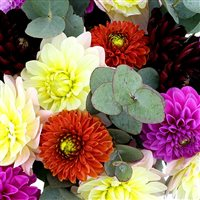bouquet-de-dahlias-multicolores-200-5177.jpg