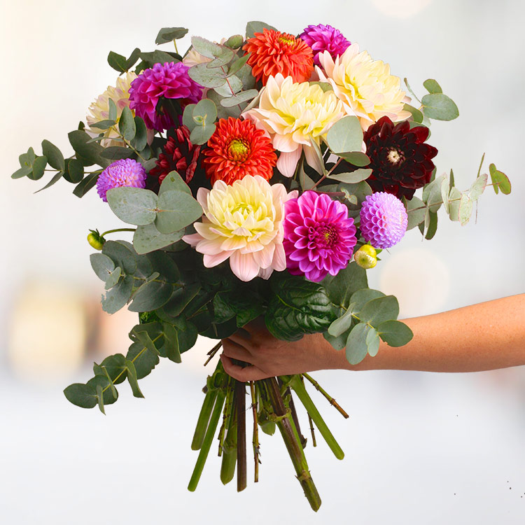bouquet-de-dahlias-multicolores-200-2555.jpg