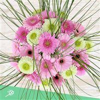 bouquet-de-germinis-roses-xxl-et-son-200-4366.jpg
