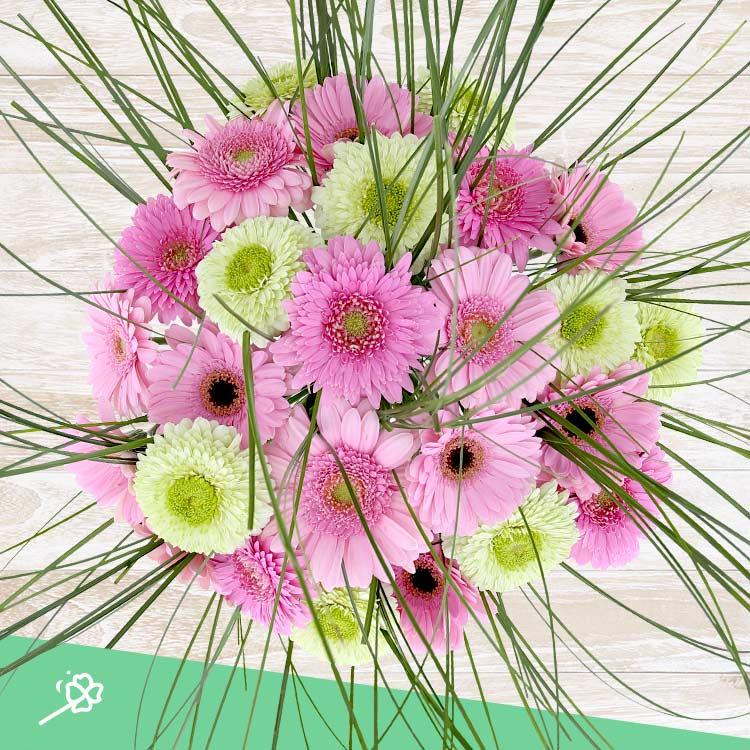 bouquet-de-germinis-roses-xxl-et-son-750-4366.jpg