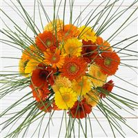 bouquet-de-germinis-tons-chauds-200-2529.jpg