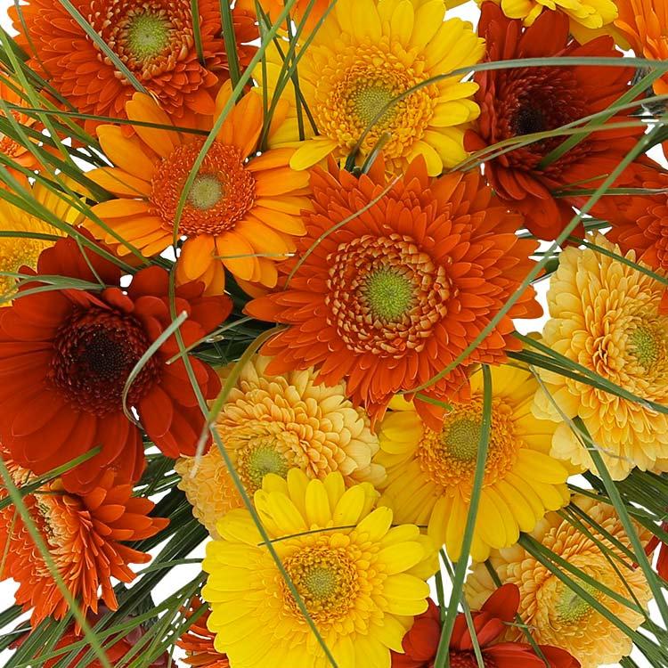 bouquet-de-germinis-tons-chauds-200-2528.jpg
