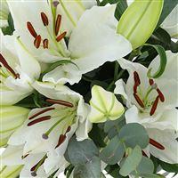 bouquet-de-lys-blancs-et-son-vase-200-2732.jpg