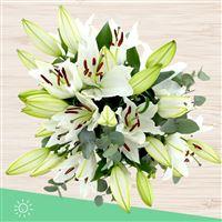 bouquet-de-lys-blancs-et-son-vase-200-4191.jpg