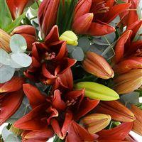 bouquet-de-lys-rouges-200-3045.jpg