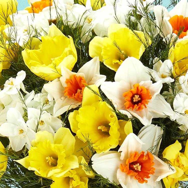 bouquet-de-narcisses-et-son-masque-b-750-4025.jpg
