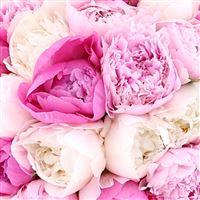 bouquet-de-pivoines-et-son-vase-200-4821.jpg