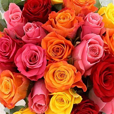 Roses et son chocolat Monbana