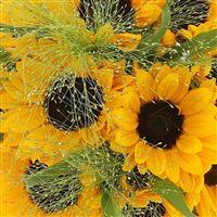 bouquet-de-tournesols-200-2563.jpg
