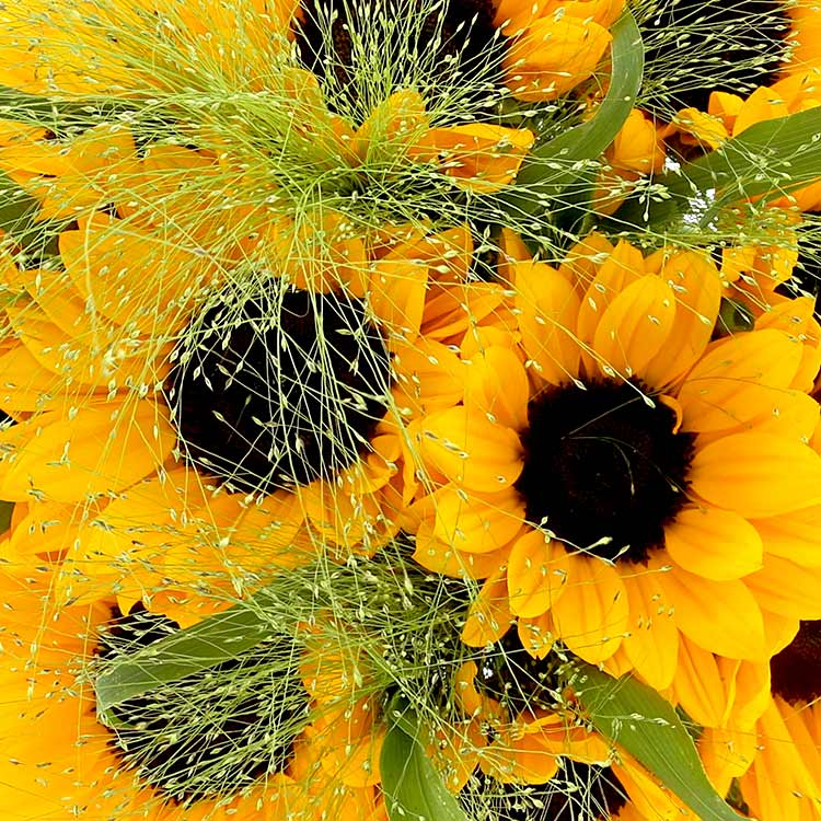 bouquet-de-tournesols-et-son-vase-200-5167.jpg