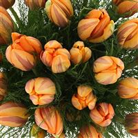 bouquet-de-tulipes-princesse-irene-x-200-3464.jpg