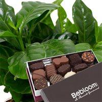 cafeier-et-chocolats-200-1999.jpg