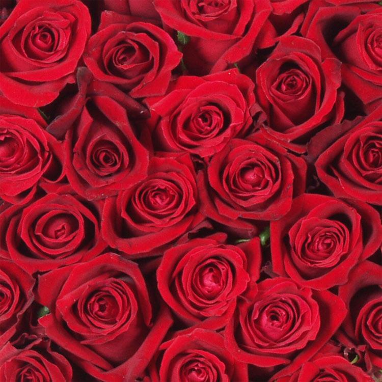 coeur-rouge-200-632.jpg