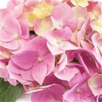 composition-fleurie-200-4764.jpg