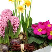 coupe-de-plantes-200-2267.jpg