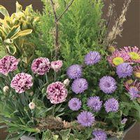 coupe-de-plantes-200-5687.jpg