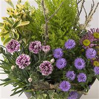 coupe-de-plantes-200-6882.jpg