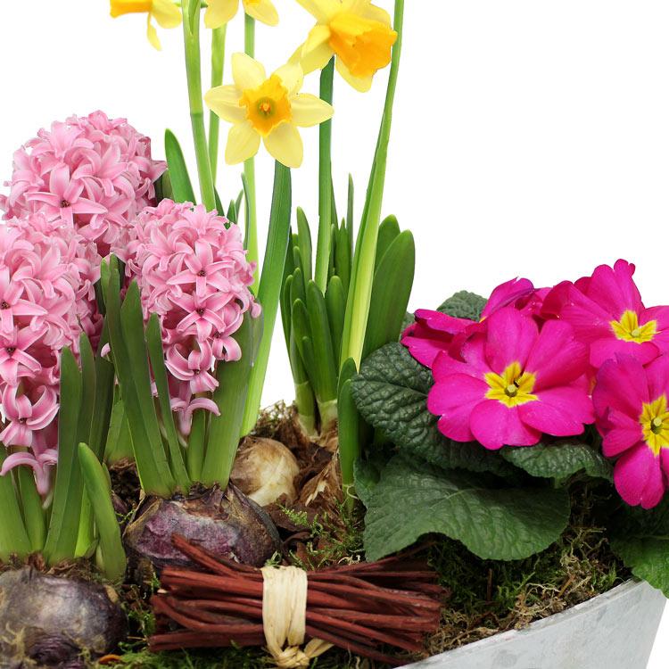 coupe-de-plantes-750-2267.jpg
