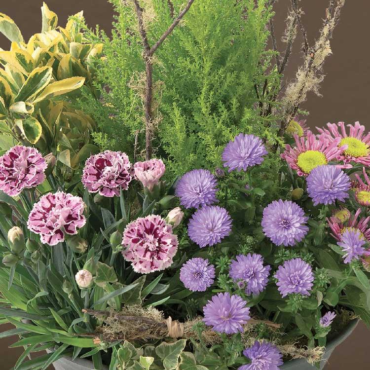 coupe-de-plantes-750-5687.jpg