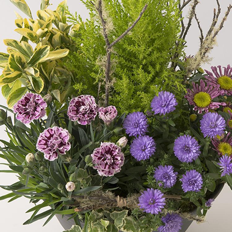 coupe-de-plantes-750-6882.jpg