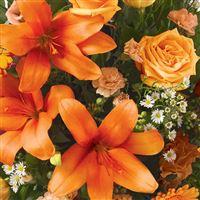 estime-orange-200-1587.jpg