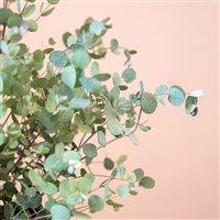 eucalyptus-200-5259.jpg