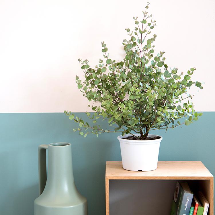 eucalyptus-750-6588.jpg