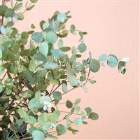 eucalyptus-et-son-cache-pot-200-5262.jpg