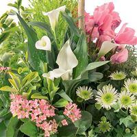 grande-coupe-de-plantes-200-1594.jpg