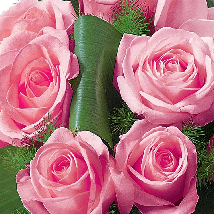hommage-rose-750-1575.jpg