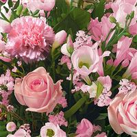 honneur-rose-200-1598.jpg