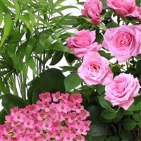 jardin-d-amour-200-1092.jpg