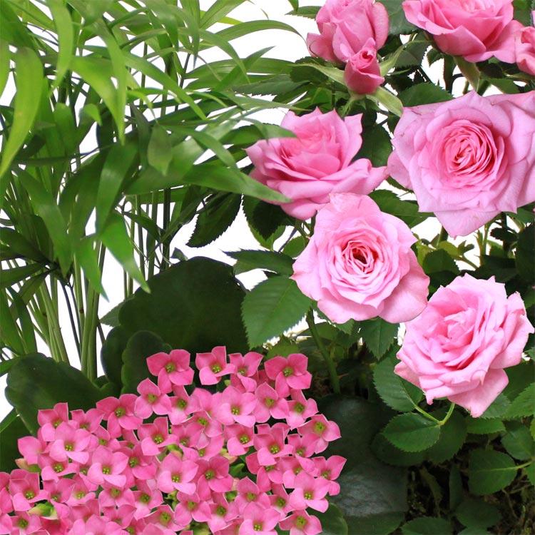 jardin-d-amour-750-1092.jpg