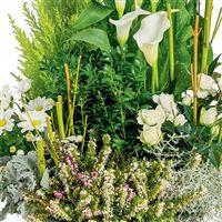 jardin-de-maia-200-1593.jpg