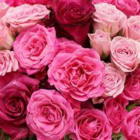 love-200-2265.jpg