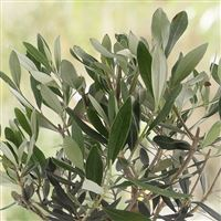 olivier-200-3013.jpg