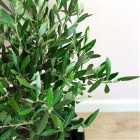 olivier-et-son-cache-pot-200-5251.jpg