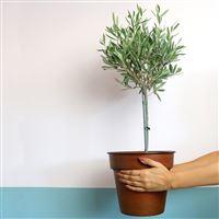 olivier-et-son-cache-pot-200-5377.jpg