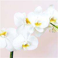 orchidee-200-7069.jpg